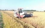 Petani di Desa Terusan Karya Senang Panen Padi Unggul Didampingi Babinsa