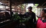 Kodim 1011 Kuala Kapuas Berikan Pendampingan kepada Peternak di Desa Saka Lagun