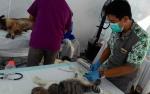 Steril Salah Satu Upaya Mengendalikan Jumlah Anjing Terlantar