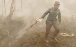 Kebakaran Hutan dan Lahan Kotim Sebabkan Sejumlah Ular Mati Terpanggang