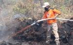 Bupati Katingan Sebut Kebakaran Lahan Gambut Sulit Dipadamkan