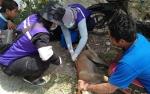 DKPP Sukamara: Rabies Masuk Dalam 25 Penyakit Hewan Menular Strategis