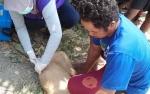 DKPP Sukamara Target 500 Ekor Hewan Diberi Vaksin Rabies