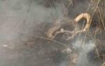 Petugas Temukan Ular Sepanjang 2,5 Meter saat Padamkan Kebakaran Lahan di MB Ketapang