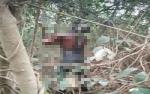 Mayat Laki-laki Tergantung di Akar Bajakah Diduga Dibunuh