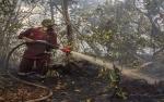 Taman Nasional Sebangau Bertahan dalam Kepungan Api