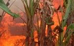 Rumah Warga Jalan Rajawali Terbakar
