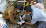 Dinas Pertanian Kapuas Imbau Peternak Ayam Waspadai Dua Penyakit ini saat Cuaca Ekstrem