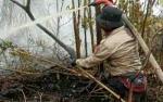 DPRD Kotawaringin Timur Minta Lahan Pasca Terbakar Diawasi