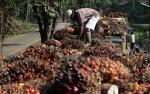 Serikat Petani Sawit Inginkan Perhatian Pemerintah