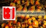 Tunas Baru Lampung Siap Tambah Produksi Biodiesel