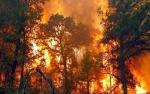 Pembakaran Hutan Disebut Kejahatan Luar Biasa