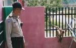 Monyet Ini Diamankan karena Mengejar dan Menggigit Warga di Palangka Raya