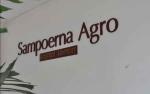 Mengintip Strategi Sampoerna Agro Hadapi Turunnya Harga CPO