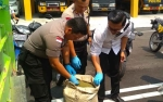 Perlu Ada Perubahan Undang-undang Terkait Tanaman Kratom