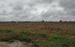 Petani di Seruyan Mulai Persiapkan Musim Tanam Oktober - Maret