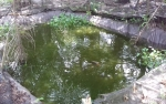 Galakkan Budidaya Ikan Jelawat di Kotim