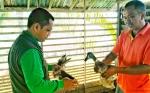 Peternak dari Desa Janah Mansiwui Studi Banding ke Hulu Sungai Utara