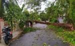 Diguyur Hujan Lebat, Banyak Pohon Tumbang di Kota Palangka Raya