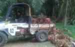 Anggap PT HMBP Ingkar Janji, Warga Desa Penyang akan Pasang Hinting Pali Lagi