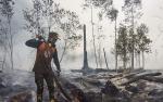 Ini Upaya Pencegahan Kebakaran Hutan Gambut di Taman Nasional Sebangau