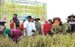 Gubernur Kalteng Pimpin Panen Padi di Lahan Rawa Kelurahan Tanjung Pinang