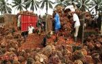 GAPKI: Ekspor Sawit ke India Kembali Normal