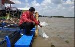 Pengayaaan Stok, 9700 Benih Ikan Ditebar di Sungai Seruyan