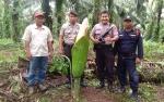 Bunga Langka Ditemukan di Kebun Sawit Desa Bangkal