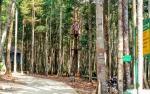 Pohon Endemik di Tahura Lapak Jaru akan Terus Ditambah