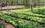 Pemerintah Siapkan Pembangunan 1.000 Kebun Bibit Desa
