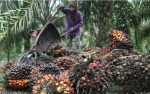 Saham Emiten CPO Terdongkrak Demand CPO Domestik
