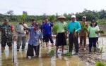 Warga Desa Puri Tanam Perdana di Lahan Cetak Sawah