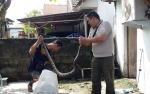 Banjir Picu Ular Masuk Rumah Warga