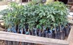 Pemkab Barito Timur terus Bantu Petani agar Lahan Produktif Tidak Dialihfungsikan Jadi Tambang Batubara