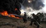 Bank Dunia: Kerugian Kebakaran Hutan RI Setara 0,5 Persen PDB