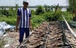 Harga Ikan Asin Tenggiri di Kuala Pembuang Masih Tinggi
