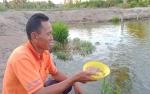 Manfaatkan Sisa Ikan untuk Pakan Budidaya Patin