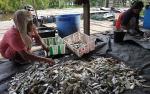 Ini Pekerjaan Ibu-Ibu Warga Desa Sungai Bakau untuk Menambah Pengasilan