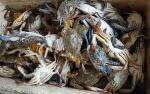 KerangLaut dan Kepiting Banjiri Pesisir Kuala Pembuang, ini Penjelasan Ilmiahnya