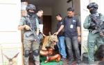 Polisi Sita Satwa Diawetkan dari Rumah Pengemudi Lamborghini