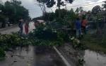 TRC BPBD Kobar Tangani 4 Insiden Pohon Tumbang Selama Desember 2019