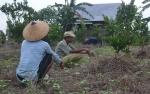 Masyarakat Sukamara Diharapkan Dukung Program Transmigrasi