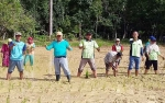 Luas Tanam Padi di Desa Nagaleah Bertambah 10 Hektare