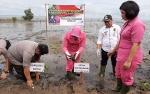Polres Kotim Tanam 1000 Pohon Mangrove di Pantai Ujung Pandaran
