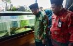 Budidaya Ikan Pipih di Seruyan Berjalan Lancar