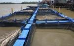 BBI Telaga Pulang Seruyan akan Budidayakan Ikan Jelawat