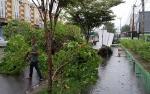Tumbangnya Pohon di Jalan Pelita Sampit Akibat Hujan Lebat