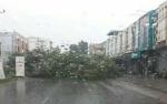 DPRD Kotim: Pohon Besar Rentan Tumbang Harus Diantisipasi