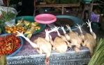 Harga Daging Ayam Potong di Kasongan Menurun